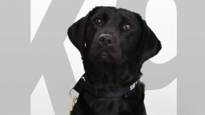 CIA Fires Sniffer Dog